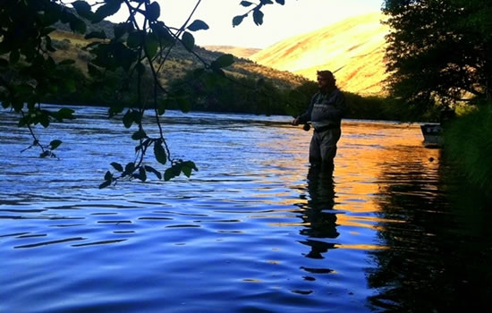 Steelhead Tips